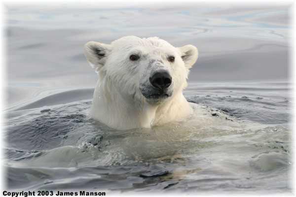 jako medved ve vode